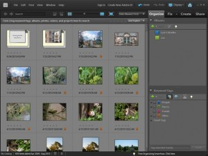 Photoshop Elements 9 Windows Organizer
